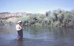 Bobbi's rod is well bent under a Beaverhead trout.