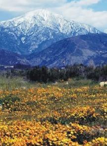 Montana mountain wildflowers